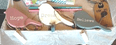 Bird Garland with pegs